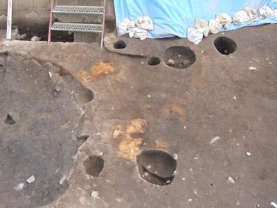 焼土跡。地面が焼けて硬くしまっています。何を焼いたのでしょうか。
