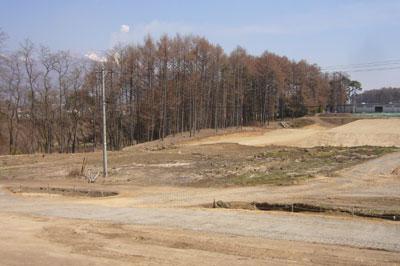 調査前風景 カラマツ林の向こうに煙をあげる浅間山が見える。